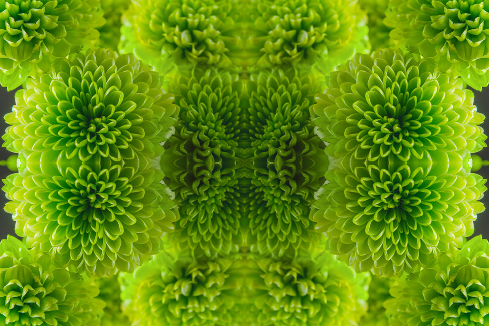 NydiaLilian_NatureSymmetry_04